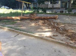 Огромное дерево упало на детскую площадку в Волжском