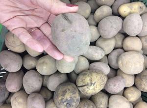 Продуктовая корзина Волжского: Самая дешевая картошка в «Карусели», а самая выгодная в «Магните»