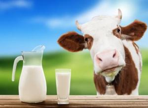 Волжский молочный комбинат поит покупателей сомнительным молоком