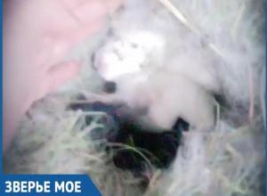 Милых новорожденных попрыгунчиков сняла на камеру счастливая волжанка
