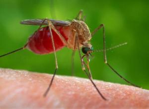 В Волго-Ахтубинской пойме начали травлю мошек и комаров с воздуха