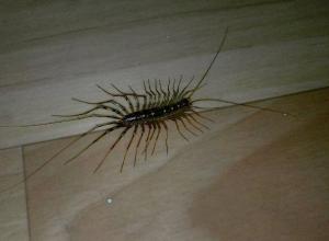 Тучу многоногих насекомых встретили волжане на заводе