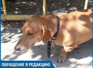 Люди-звери оставили собаку умирать под солнцем, - волжанин