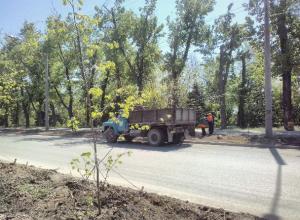 В Волжском высаживают 800 молодых деревьев и кустарников