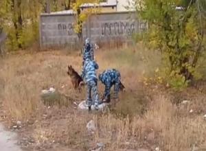 Кинологи переместили поиски на территорию теплотрассы в Волжском