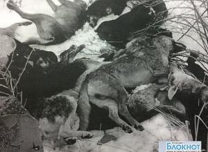 Рядом с заводом ЗОС в Волжском нашли трупы 26 пристреленных собак