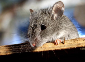 Бегающие мыши по кабинету гинеколога шокировали волжанку
