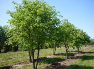 В Волжском решили высадить 1644 саженца растений