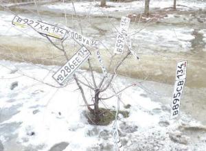 Автомобильные номера распустились на дереве в Волжском