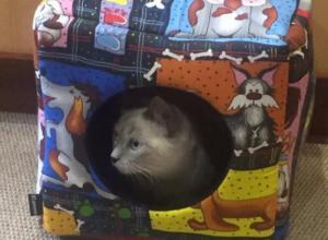 Победительница конкурса «Самый красивый кот» облюбовала подаренный ей домик