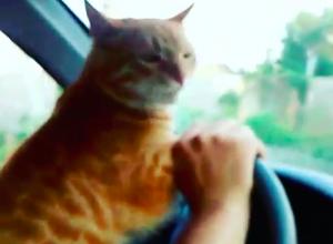 Рыжего котэ хозяева заставили вести автомобиль в Волжском