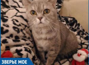 Статья «Блокнота Волжского» о ветвраче помогла мне сберечь здоровье кошки, - волжанка Екатерина Чопорова