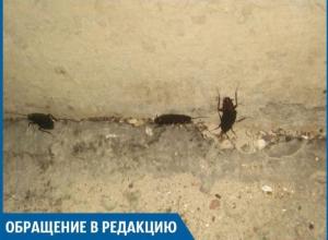 Трехсантиметровые тараканы плодятся в жилых домах Волжского