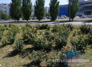 Перед выборами в Волжском стали заботиться о цветочках