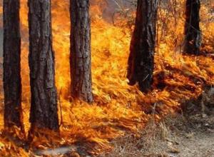 В Волжском и его округе обещают чрезвычайную пожароопасность
