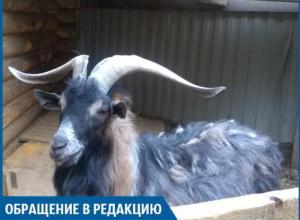 Животные в зоодворике в Волжском мучаются от жары и грязи, - горожанка