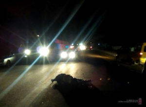 В Волжском объявили в розыск ночного убийцу за рулем
