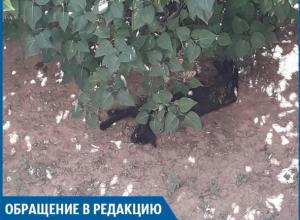Хозяин пса оставил умирать разорванного котенка, - волжанка