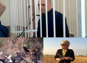 Детство Масленникова, убийство собак и доход Ирины Гусевой: 19 апреля в Волжском