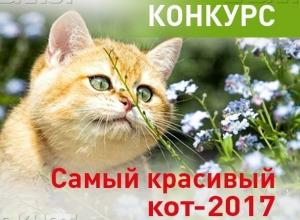Голосование за участников конкурса «Самый красивый кот-2017» стартовало!