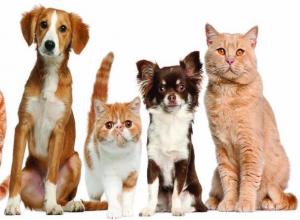 Волжская дума прокомментировала налог на домашних животных