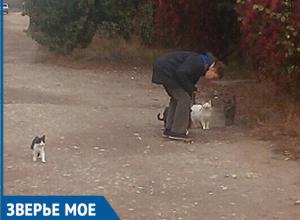 Сердобольный мальчик, кормящий кошек, умилил прохожих в Волжском