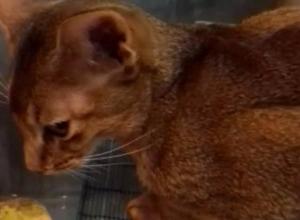 Волжанка заплатила псевдоврачу 15 тысяч рублей за лечение котенка