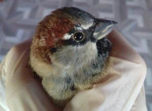 Волжанка выпустила свою «птицу счастья» в Киляковке