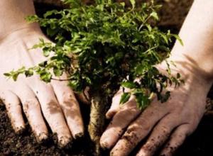 Волжанам предложили выиграть 9000 деревьев в федеральном проекте