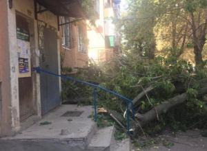 Огромные ветки дерева рухнули на подъезд жилого дома в Волжском