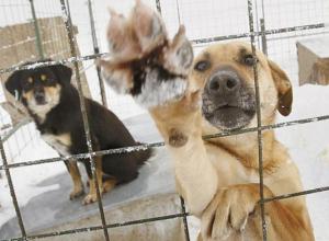 Соседи стали самостоятельно убивать собак, - волжанка
