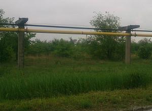 150 гектаров зеленой рощи решили вырубить в Волжском ради нового кладбища в промзоне