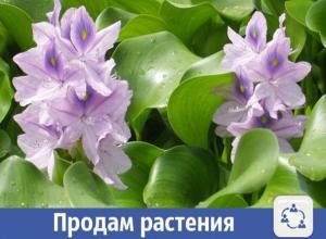 Прекрасные плавающие растения продают в Волжском