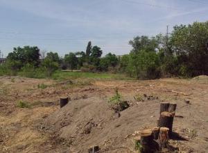 В Волжском незаконно вырубили деревья на большой площади
