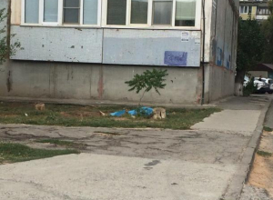 Под окнами девятиэтажки волжане обнаружили труп женщины