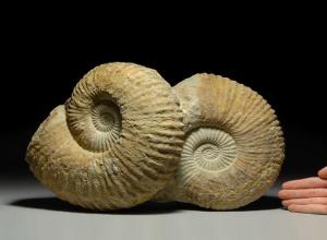 Волжан пригласили на встречу с российским палеонтологом