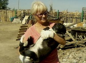 Полсотни собак из приюта, который сносят власти Волжского, могут оказаться на улице