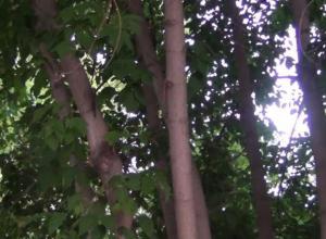 Инновационный полив деревьев запустили в Волжском