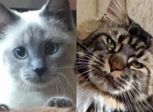 Победителями конкурса «Самый красивый кот-2017» стали Матильда, Вальтер, Бегемот, Томик, Саймон, Боняша и Ричард