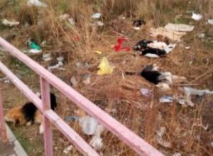 Волжане попросили устранить свору бродячих собак в 38 микрорайоне