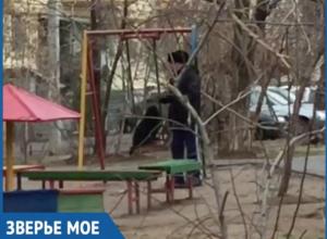 Здоровый пес уговорил хозяина покататься на качелях в Волжском