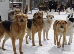 Самим решать проблему с бродячими собаками предложили дачникам Волжского