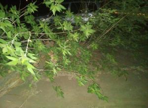 В Волжском на улице Горького сильный ветер сломал дерево