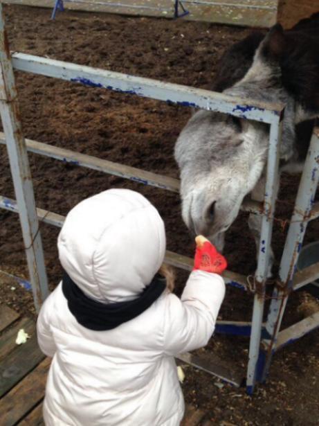 Бизнес, построенный на страданиях животных, - Екатерина Романова о волжском зоодворике