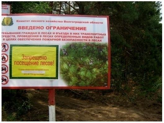 Запрет на посещение лесов в Волгоградской области продлили до 1 июня