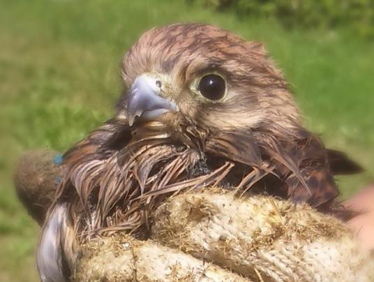 Редкую птицу из красной книги спасли в Волжском