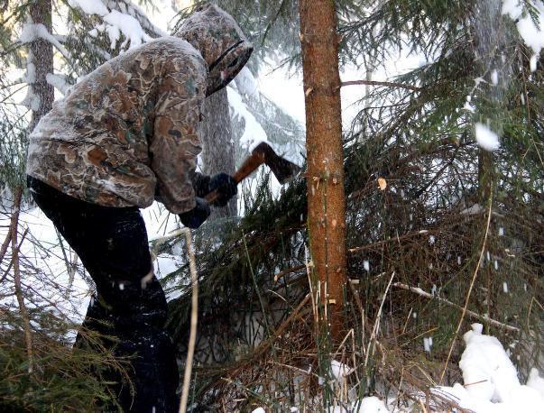 Житель Краснослободска вырубил деревья на 450 тысяч