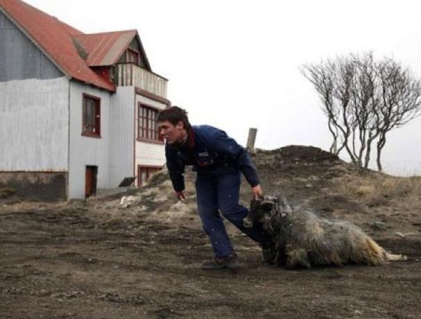 Полицейские Быковского района задержали похитителя овец
