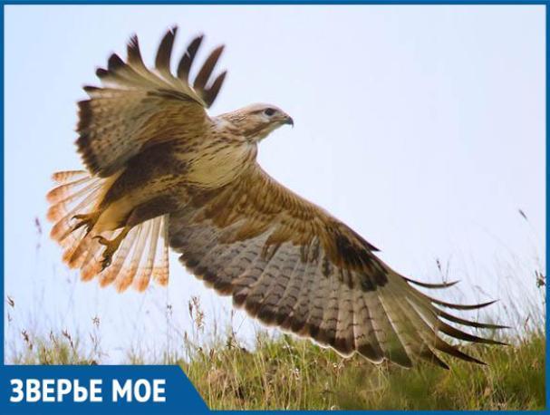 В Ленинском районе нашли мертвого краснокнижного орла