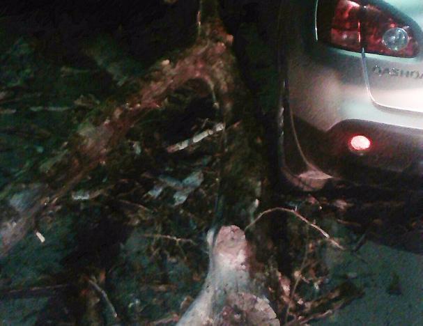 Гнилое дерево превратило припаркованное авто в участника «дерби» в Волжском
